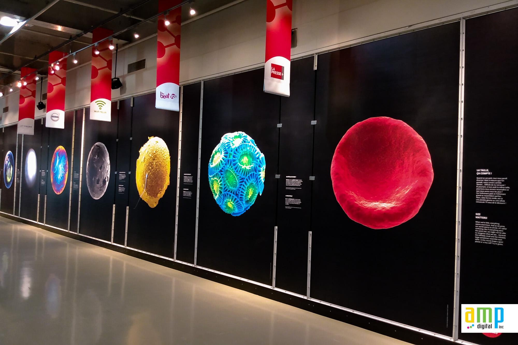 Habillage de vitrine en vinyle autocollant pour exposition au centre des sciences de Montréal